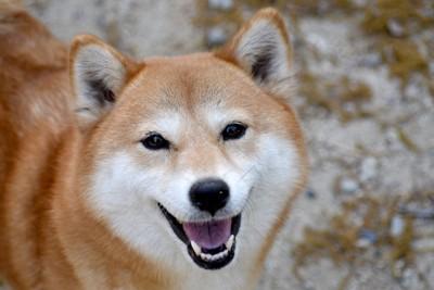 笑顔で見上げる犬
