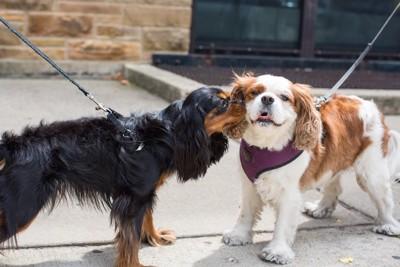 散歩中に会った友達と挨拶する犬