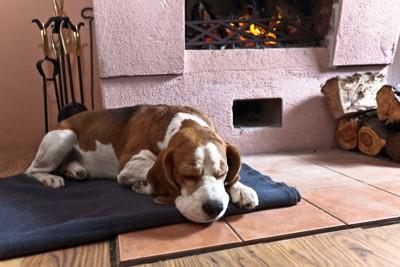 暖炉の前で眠るビーグル