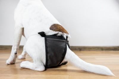 黒いおむつを着けた犬の後ろ姿