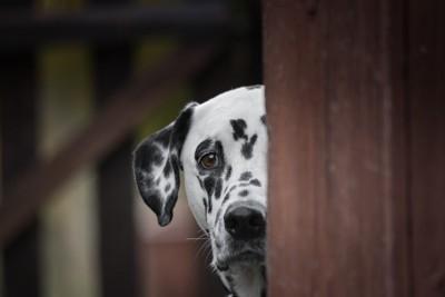 ドアの影に隠れる犬