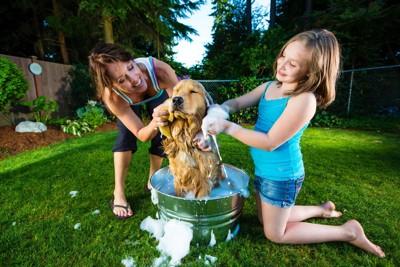 犬を洗っている母子