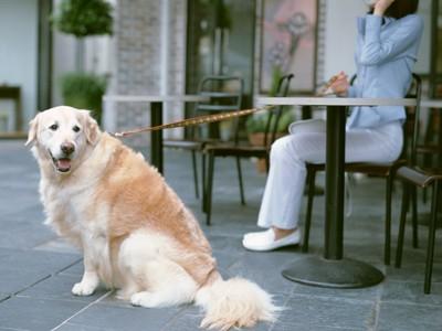 外で座る犬