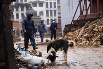 崩壊した街でさまよう犬