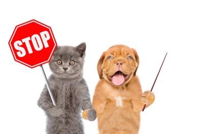 ストップサインの看板を持った猫と犬