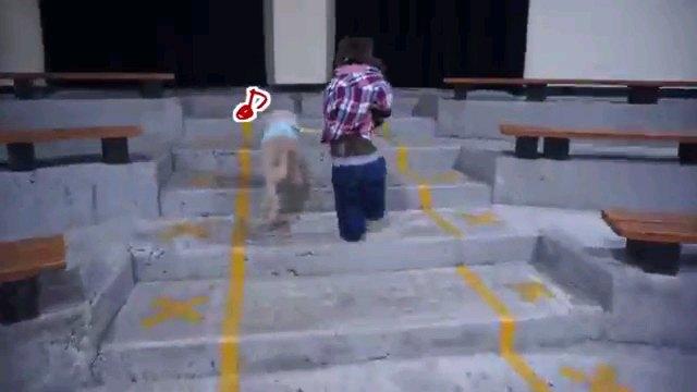 散歩する犬と猿