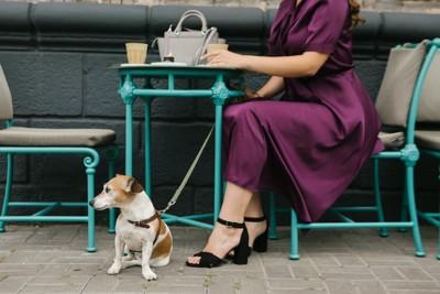 カフェのテラス席でくつろぐ飼い主の足元に座る犬