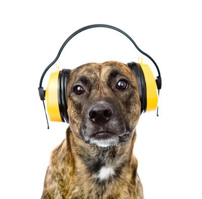 ヘッドフォンを耳にかぶる犬