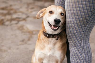 女性の足に寄り添う犬