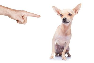 叱られる犬イラスト