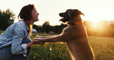 手を取り合って見つめ合う女性と犬