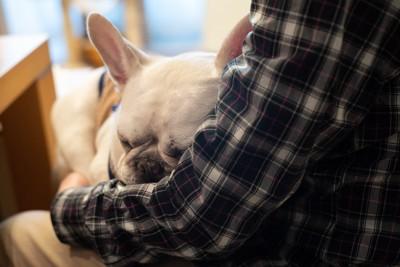 抱っこで眠るフレンチブルドッグ