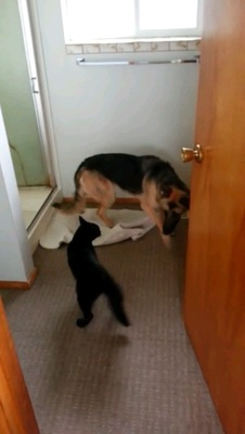 シャワー室を出る犬