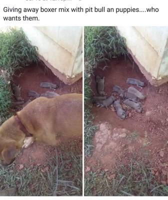 子犬と母犬の写真