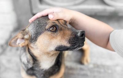 飼い主に頭を触られている犬