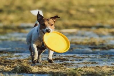 プラスチックのおもちゃで遊ぶ犬