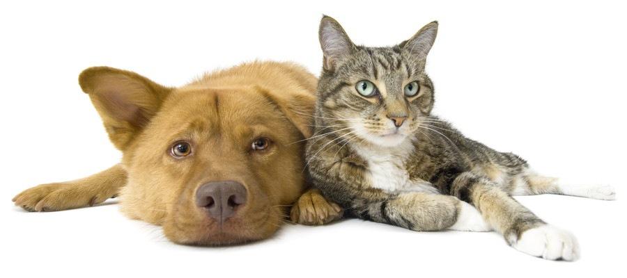 寄り添って寝転がる犬と猫