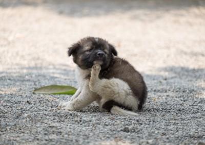 かゆそうな犬