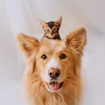 子猫を頭に乗せた犬