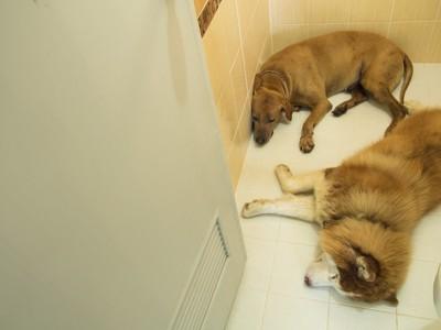 お風呂場でくつろぐ犬