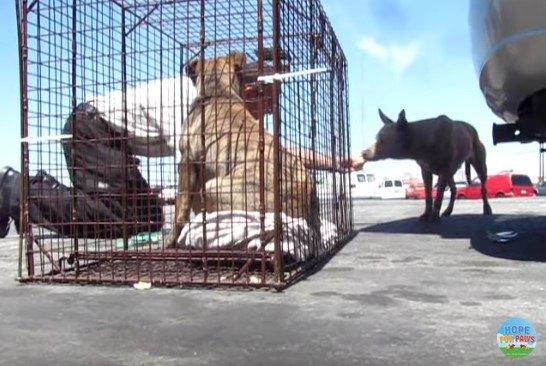ケージの子犬と近づく母犬