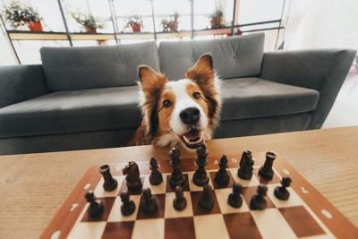 部屋でチェスをする犬