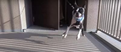 飛び跳ねる