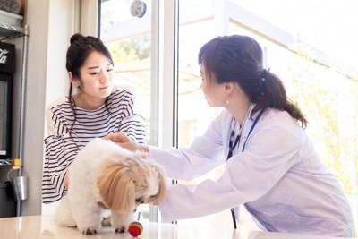 シーズーと飼い主と獣医師