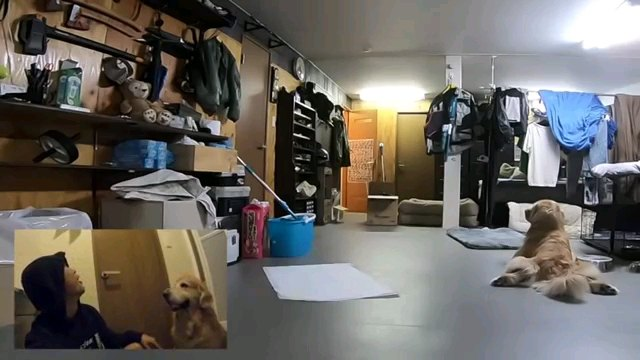後ろ姿の犬とスワイプ
