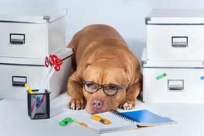 ストレスを抱えてそうな犬