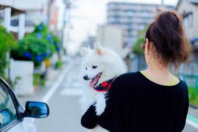 白い犬を抱っこする女性
