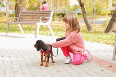 少女と赤いハーネスを着けた犬