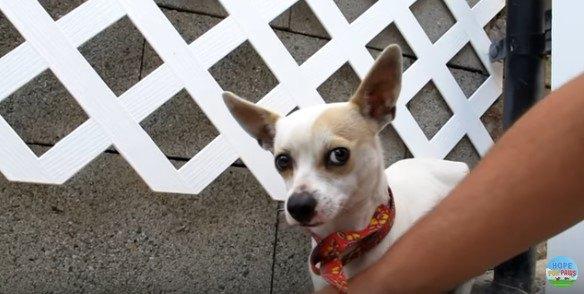 横目で人を見る犬