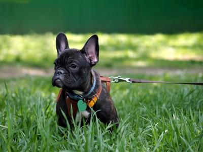 緑のある場所で散歩している犬