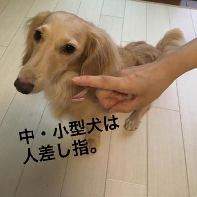 中・小型犬人差し指