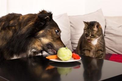野菜を見ている犬と猫