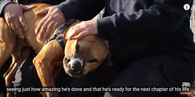 人に甘える犬1