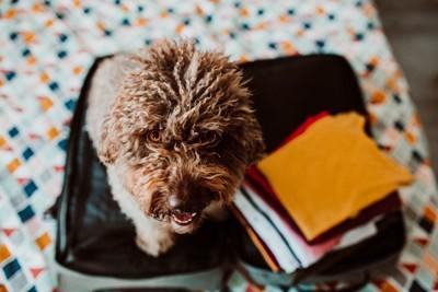 旅行バッグの上に座る犬