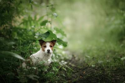 葉っぱと犬