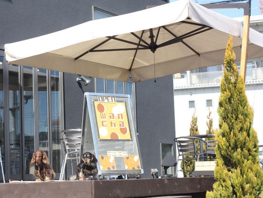 cafe wanchaの外観