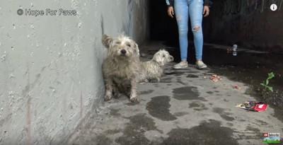 下水道の入り口にいる2匹の犬