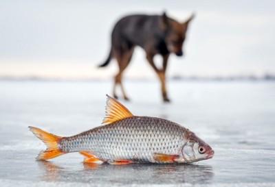 魚とぼんやり写る背景の犬