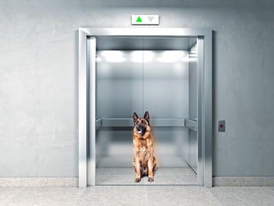 エレベーターの中の犬