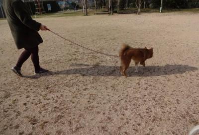 お散歩 私の写真