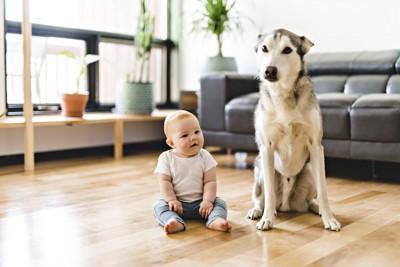 お座りしている犬と子ども