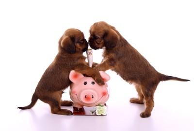 貯金箱に手をかけて立ち上がる二匹の子犬