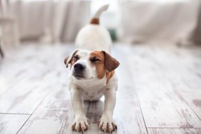 目を閉じて伸びをする犬