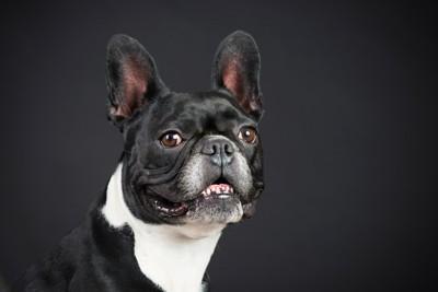 黒い背景の犬