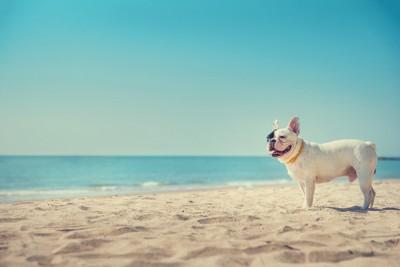砂浜に立っている犬