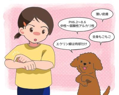 犬と人間の皮膚の違いについて